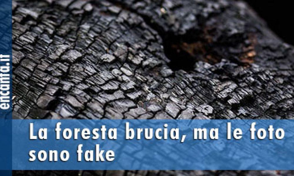La foresta brucia, ma le foto sono fake
