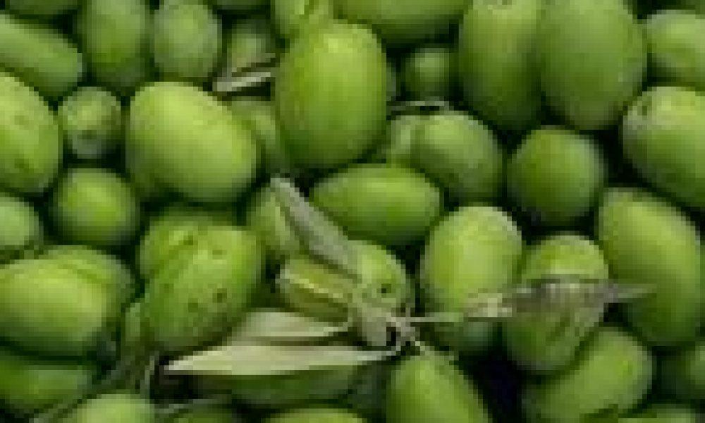 Dieta mediterranea ed olio extravergine di oliva: via il colesterolo