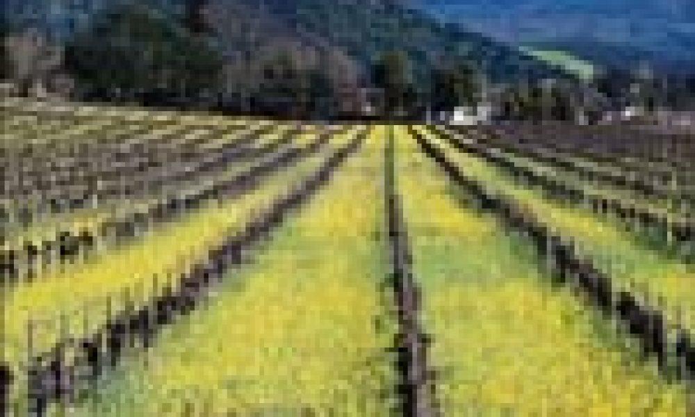 L'agricoltura contro l'effetto serra