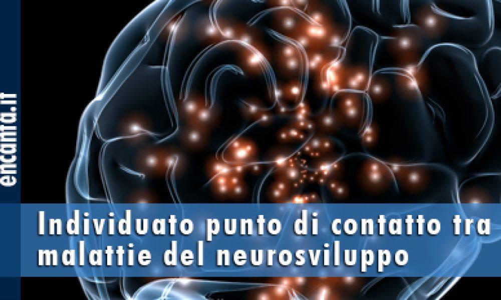 Individuato punto di contatto tra malattie del neurosviluppo