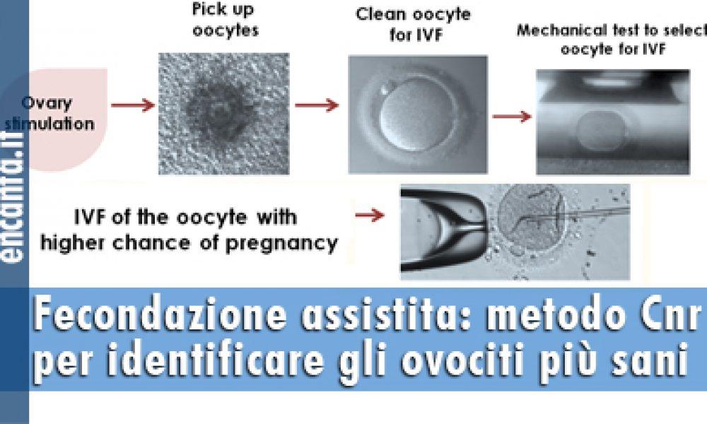 Fecondazione assistita: metodo Cnr per identificare gli ovociti più sani