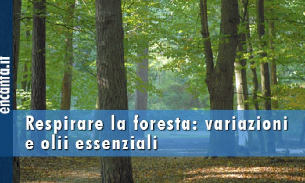 Respirare la foresta: variazioni e olii essenziali