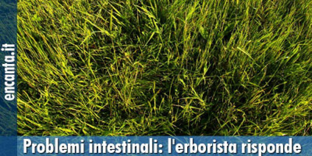 Problemi intestinali: l'erborista risponde