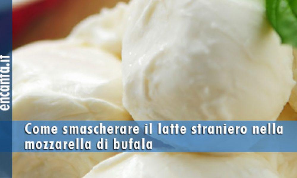 Come smascherare il latte straniero nella mozzarella di bufala