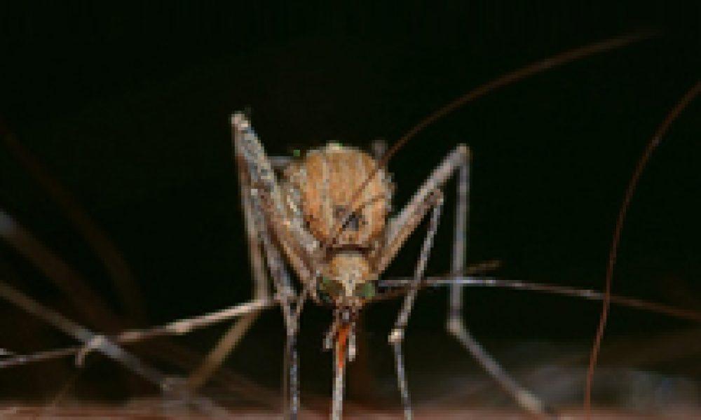 Zika: eccesso di cautela (giustificato)