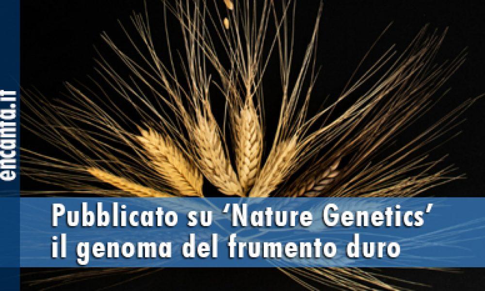 Pubblicato su 'Nature Genetics' il genoma del frumento duro