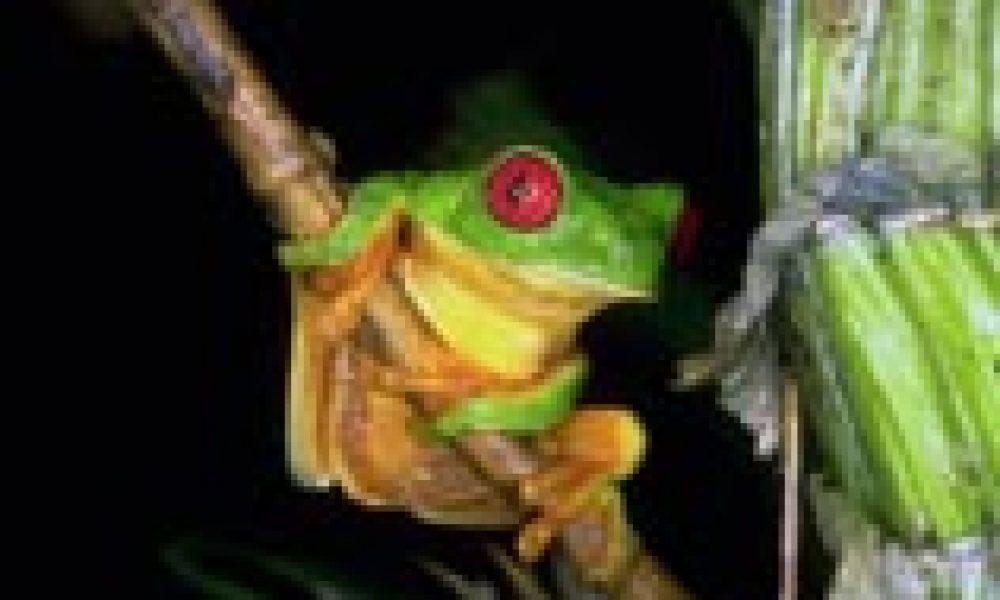 Una rana ci aiuterà