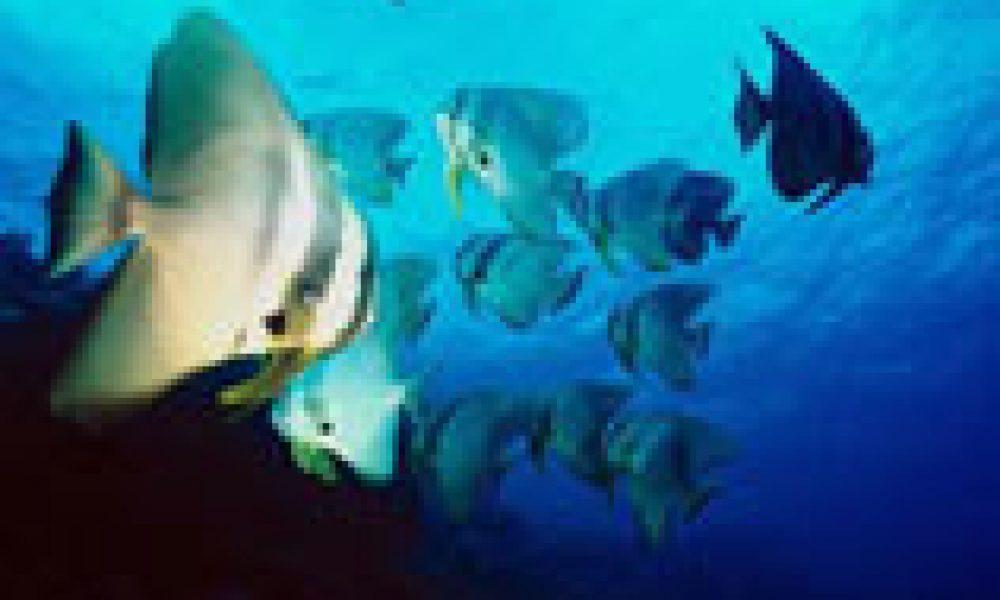 Mediterraneo: allarme mercurio