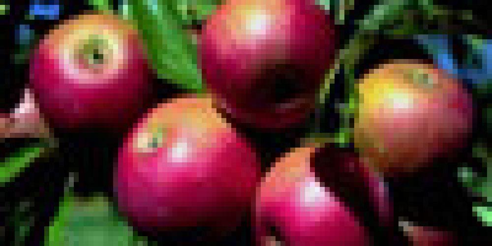 Mele, cipolle e vino rosso, nemici dei tumori