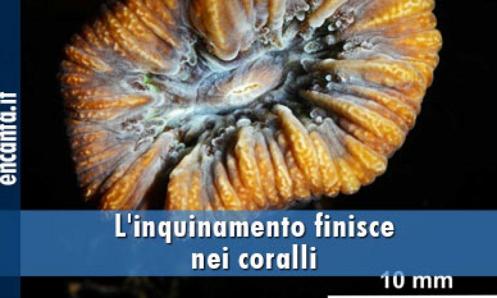 L'inquinamento finisce nei coralli
